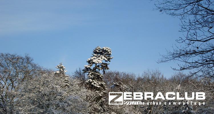 Zebraclub 15% end of the year sale